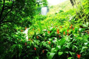 Lepusztult bányavidékből trópusi édenkert