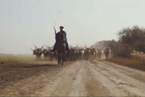 Vadnyugati videó készült a hortobágyi gulya behajtásáról