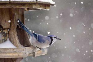 Téli madáretetés mikor hogyan mit etessünk