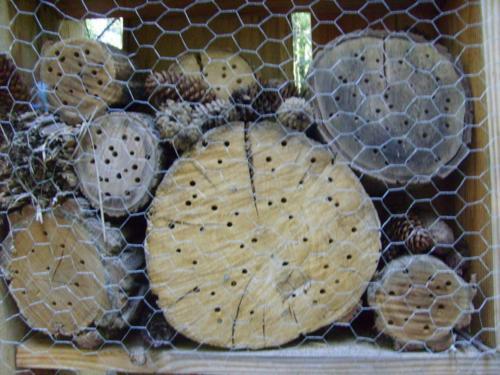 20.A lyukakba költöznek a rovarok